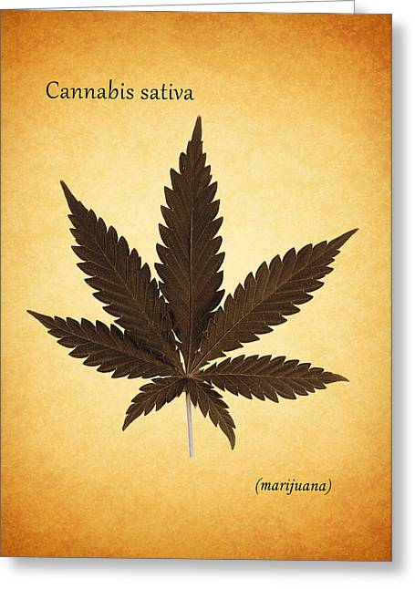 Botany Greeting Cards - Cannabis sativa Greeting Card by Mark Rogan