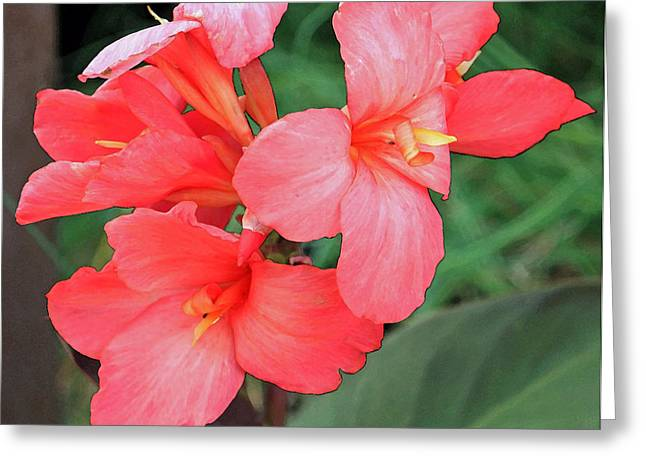 Canna Lily Greeting Cards - Cannas Amarillo Greeting Card by Suzanne Gaff