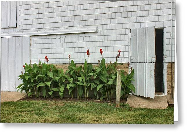 Canna Greeting Cards - Cannas by Quaker Barn Greeting Card by Karen Ament