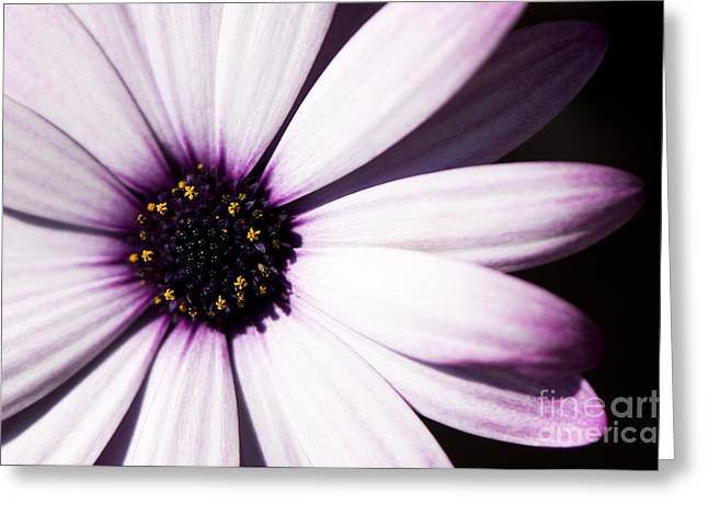 Close Focus Floral Greeting Cards - Cannington Roy Greeting Card by Anne Gilbert