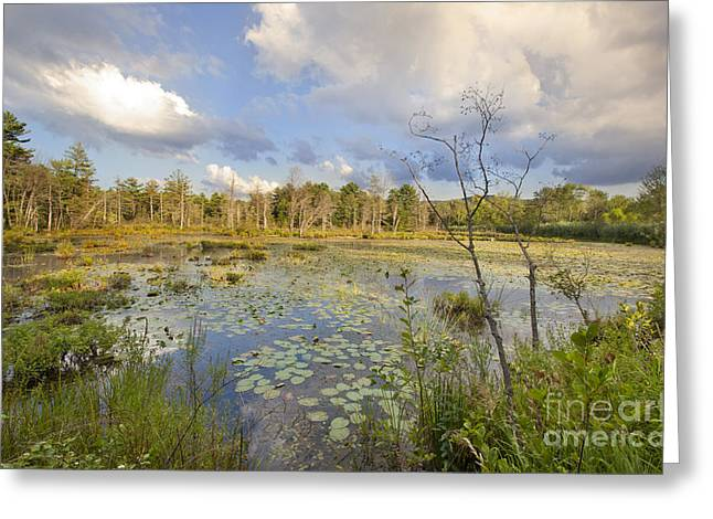 Water Lilly Greeting Cards - Canoe Meadows Greeting Card by Jonathan Welch
