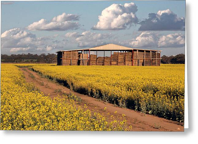 Hayshed Greeting Cards - Canola And Hay Greeting Card by Helen Akerstrom Photography