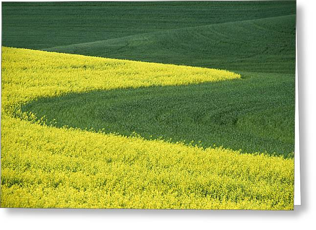 July Greeting Cards - Canola and Wheat Greeting Card by Latah Trail Foundation