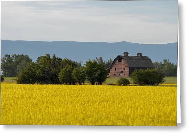 Old Barns Greeting Cards - Canola Farm Greeting Card by Whispering Peaks Photography