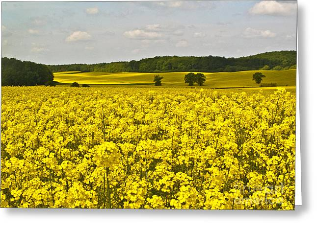 Canola Field Greeting Card by Heiko Koehrer-Wagner