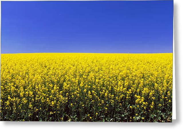 Idaho Photography Greeting Cards - Canola Field In Bloom, Idaho, Usa Greeting Card by Panoramic Images