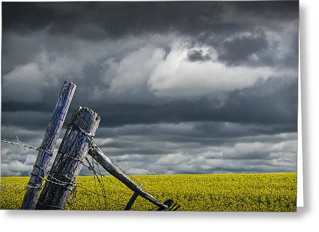Alberta Prairie Landscape Greeting Cards - Canola Field in Southern Alberta Greeting Card by Randall Nyhof