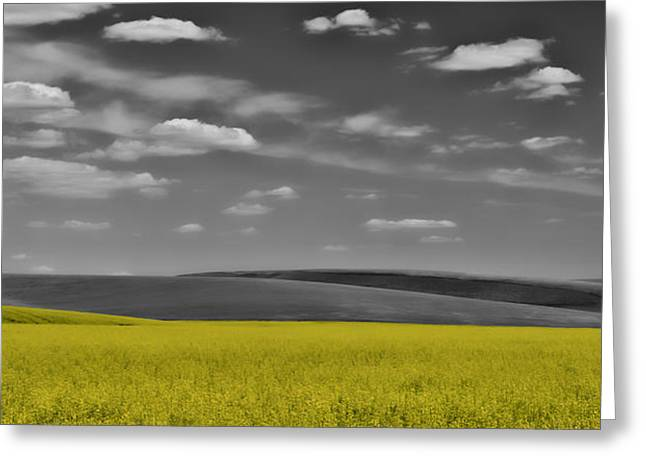Pastureland Greeting Cards - Canola Fields Greeting Card by Don Schwartz