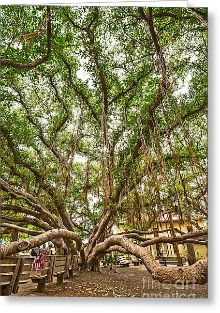 Lahaina Greeting Cards - Canopy - Banyan Tree Park in Maui Greeting Card by Jamie Pham
