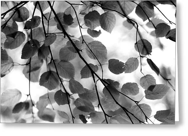 Canopy Greeting Card by Aaron Aldrich
