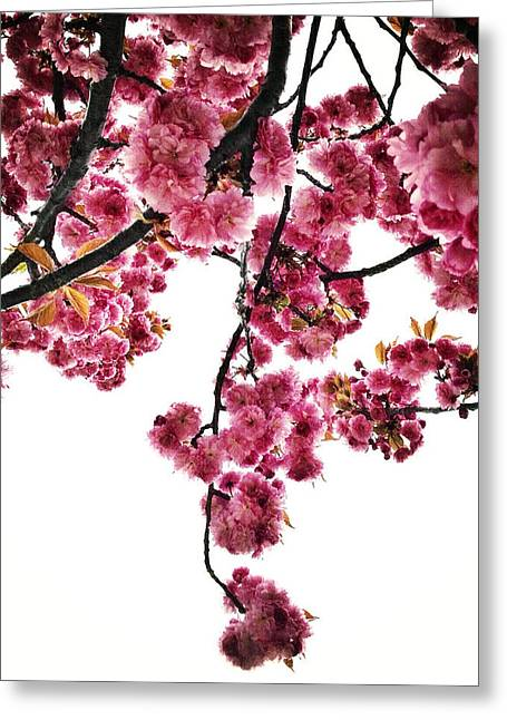 Prospects Greeting Cards - Canopy Bouquet Greeting Card by Natasha Marco