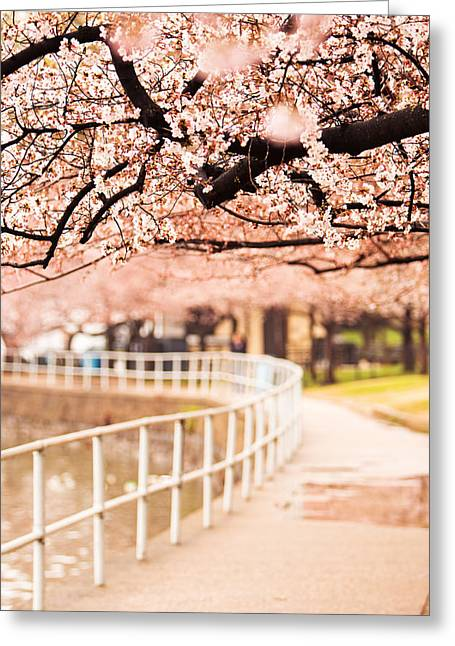 Canopy Of Cherry Blossoms Over A Walking Trail Greeting Card by Susan  Schmitz