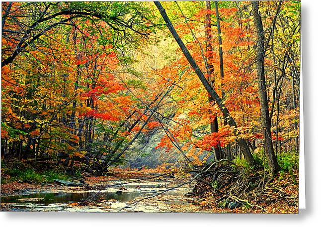 Canopy of Color II Greeting Card by Frozen in Time Fine Art Photography