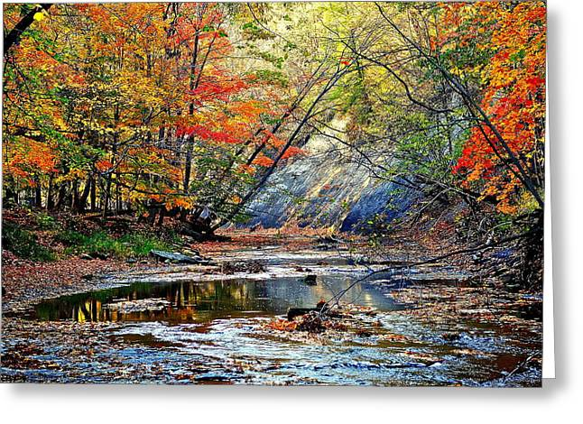 Golden Brown Greeting Cards - Canopy of Color IV Greeting Card by Frozen in Time Fine Art Photography