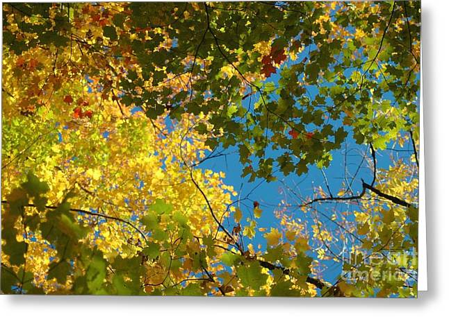 Struckle Greeting Cards - Canopy Of Colors Greeting Card by Kathleen Struckle
