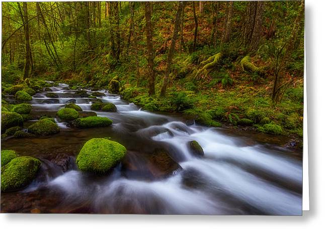 Lush Greeting Cards - Canopy of Green Greeting Card by Darren  White