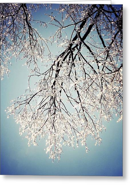 Bare Trees Digital Greeting Cards - Canopy of Ice Greeting Card by Natasha Marco