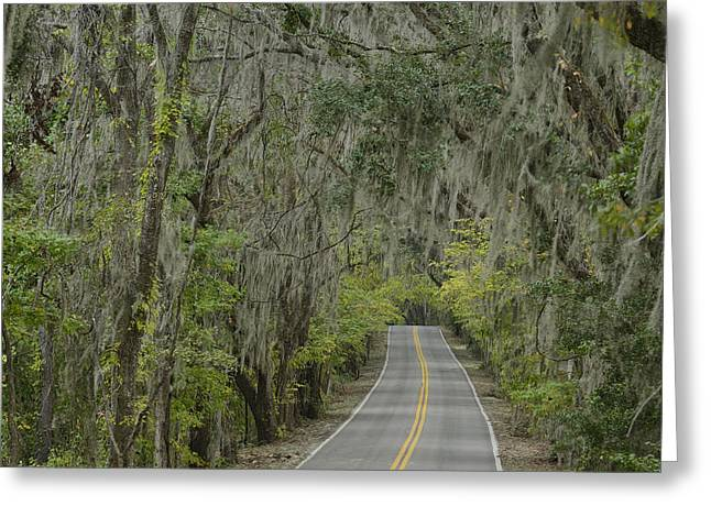 Oak Alley Greeting Cards - Canopy Road Greeting Card by Christian Heeb