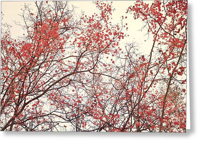 Red Leaves Greeting Cards - canopy trees II Greeting Card by Priska Wettstein