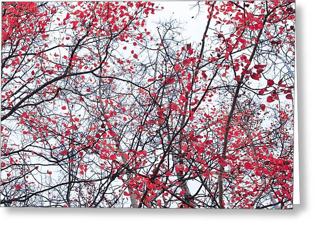 Red Leaves Greeting Cards - Canopy Trees Greeting Card by Priska Wettstein