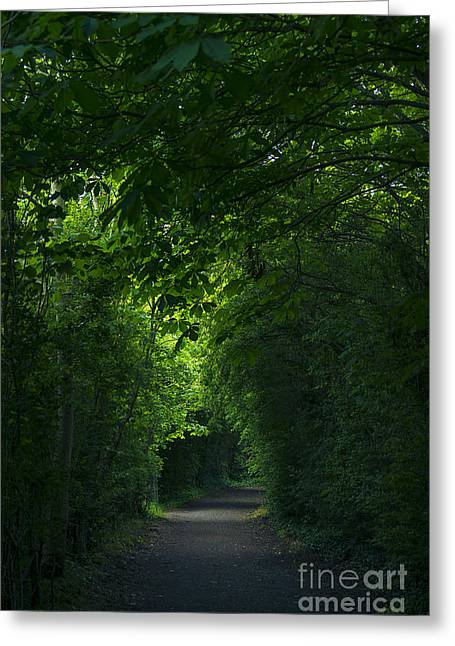 Dark Hedges Greeting Cards - Canopy Trees Greeting Card by Svetlana Sewell