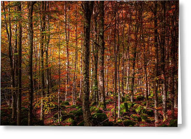 Orangem Tree Greeting Cards - Cant find my way home Greeting Card by Stefano Termanini