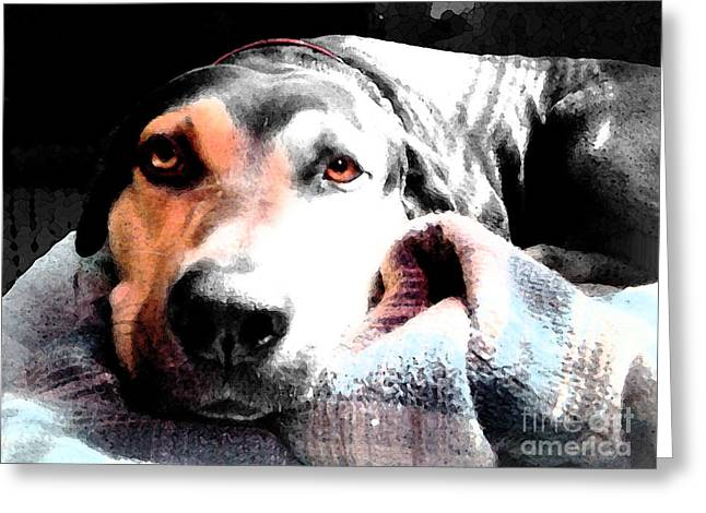 Studded Collar Greeting Cards - Cant Sleep Greeting Card by David L Thomas