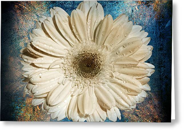 Vintage Floral Greeting Cards - Canvas Still  Greeting Card by Mark Ashkenazi