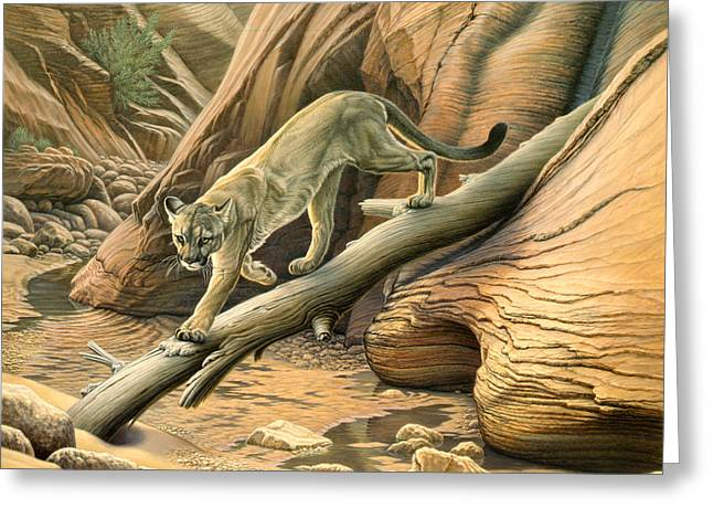 Lions Greeting Cards - Canyon Hunter -  Cougar Greeting Card by Paul Krapf