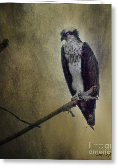 Osprey Pyrography Greeting Cards - Canyon Lake Osprey II Greeting Card by Rhonda Strickland