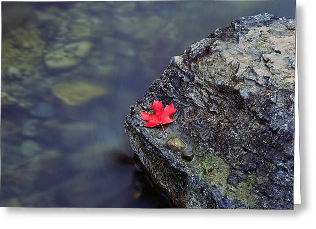 Water Flowing Greeting Cards - Canyon Maple Leaf Greeting Card by Mike Norton