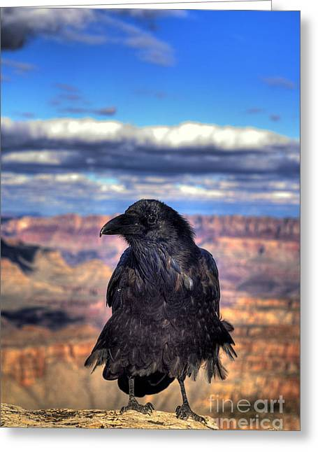 Raven Note Cards Greeting Cards - Canyon Raven Greeting Card by K D Graves