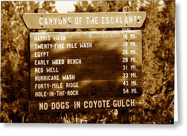 Coyote Gulch Greeting Cards - Canyon signs Greeting Card by David Lee Thompson