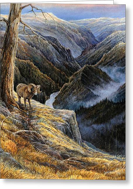 Salmon Paintings Greeting Cards - Canyon Solitude Greeting Card by Steve Spencer