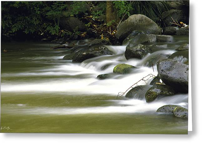 Oak Creek Greeting Cards - Canyon Stream Greeting Card by Randy Bradley