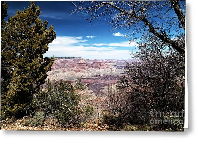 The Grand Canyon Greeting Cards - Canyon View Between the Trees Greeting Card by John Rizzuto