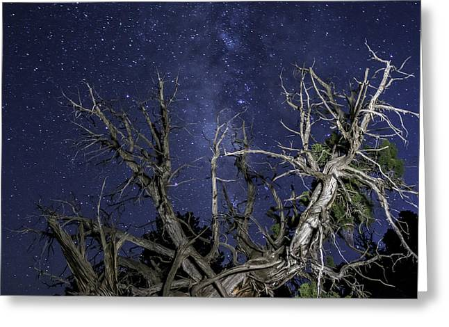 Canyonlands Night Sky Greeting Card by Michael J Bauer