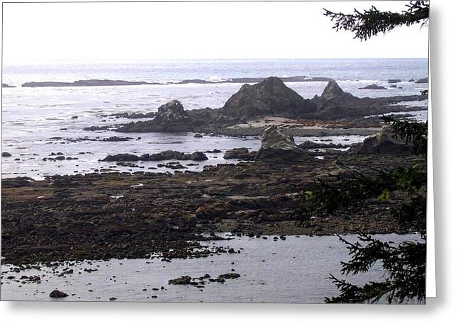 Ocean Vista Greeting Cards - Cape Arago Sea Lion Colony Greeting Card by Will Borden