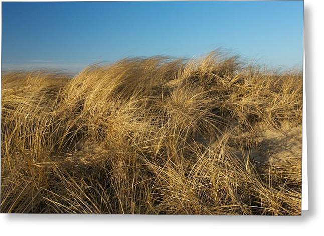 Cape Cod Mass Greeting Cards - Cape Cod Dune Grass Greeting Card by Allan Morrison