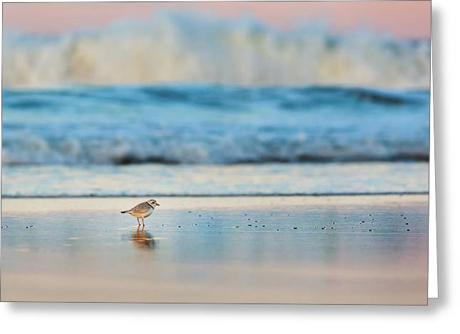 Piping Greeting Cards - Cape Cod National Seashore Piping Plover Greeting Card by Bill Wakeley