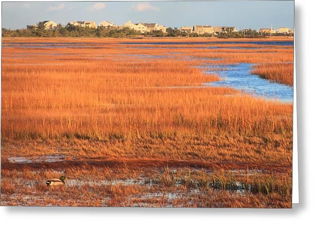 Massachusetts Coast Greeting Cards - Cape Cod Salt Marsh Autumn Evening Greeting Card by John Burk