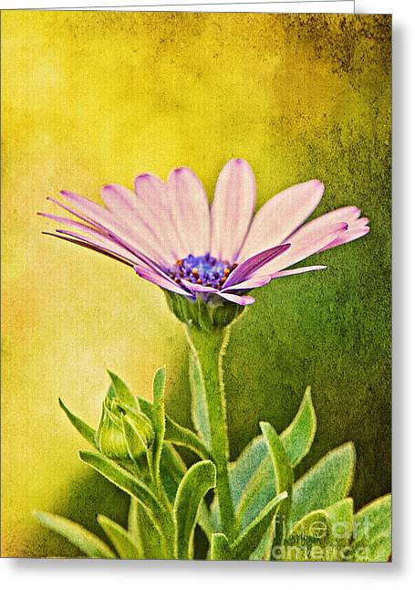Cape Daisy Greeting Card by Lois Bryan