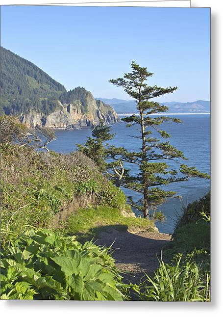 Cape Falcon Viewpoint Oregon Coast. Greeting Card by Gino Rigucci