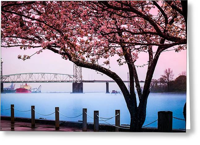 Cape Fear River Greeting Cards - CAPE FEAR of WILMINGTON Greeting Card by Karen Wiles