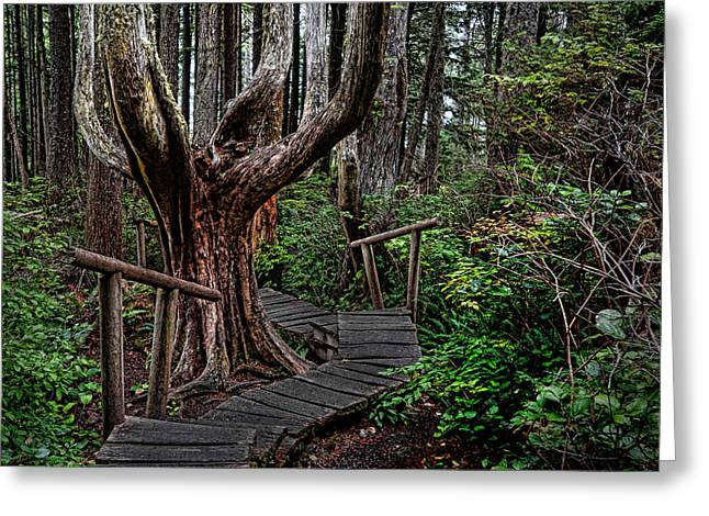 Cape Flattery Greeting Cards - Cape Flattery trail Greeting Card by Tom  Reed
