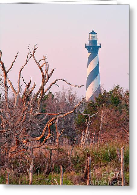 The North Pyrography Greeting Cards - Cape Hatteras Lighthouse and Trees Greeting Card by Dan Waters