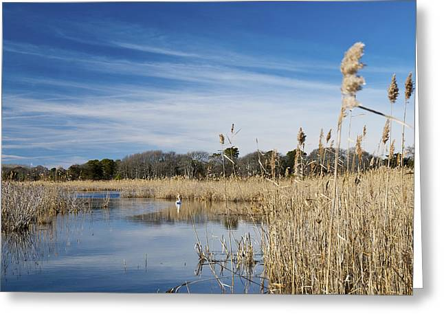 Peaceful Photographs Greeting Cards - Cape May Marshes Greeting Card by Jennifer Lyon