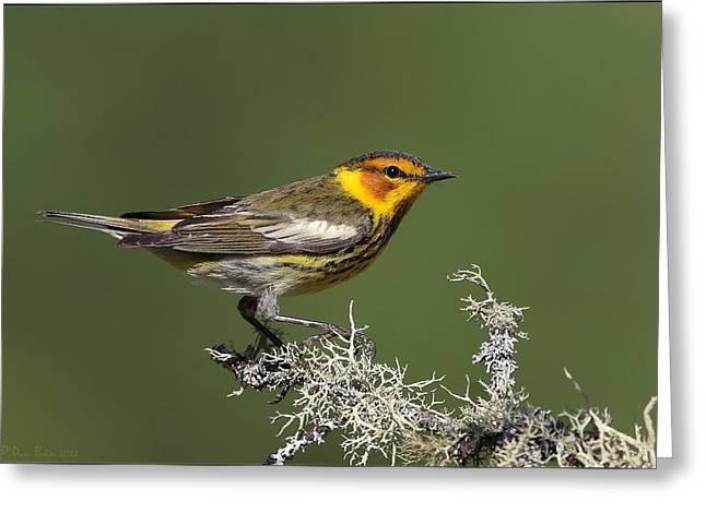 Warbler Digital Art Greeting Cards - Cape May Warbler profile Greeting Card by Daniel Behm