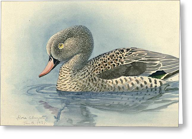 Cape Teal Greeting Card by Louis Agassiz Fuertes