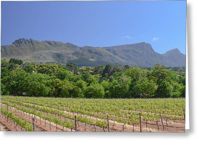 Winelands Greeting Cards - Cape Town Winelands Greeting Card by Deep Matharu